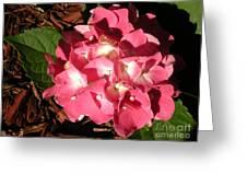 Hydrangea Flower Greeting Card