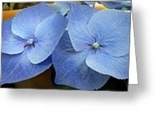 Hydrangea Flower Set Greeting Card
