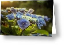 Hydrangea In Fading Light Greeting Card
