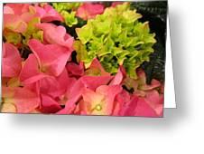 Hydrangea Joy Greeting Card