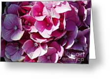 Hydrangea Lavender Petals Greeting Card