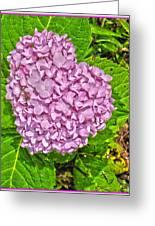 Hydrangea Love Greeting Card