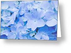 Hydrangea Macrophylla  Greeting Card