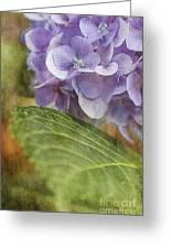 Hydrangea Portrait Greeting Card