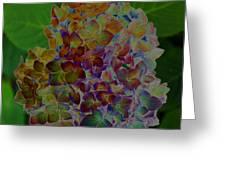 Hydrangea Solorized Greeting Card