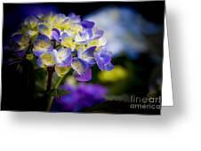 Purple Blue Hydrangea, Corona Del Mar California Greeting Card