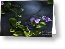 Hydrangea Violet-blue Greeting Card