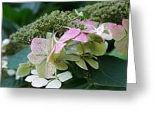 Hydrangea White And Pink I Greeting Card