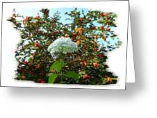 Hydrangea With Mountain Ash Greeting Card