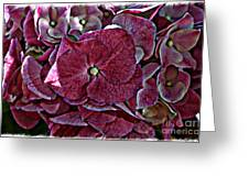 Hydrangeas In Rich Rose Color Greeting Card