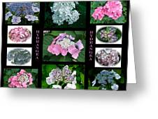 Hydrangeas On Parade Greeting Card