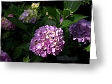 Hydrangeas Vi Greeting Card