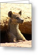 Hyena In Den Greeting Card