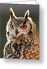 Hypnoteyes  Eurasian Eagle Owl Greeting Card