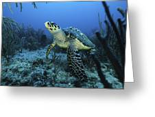 I Am A Proud Hawksbill Turtle Greeting Card