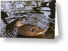 I Am Surrounded Greeting Card