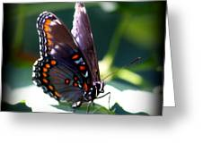 I Butterfly Greeting Card