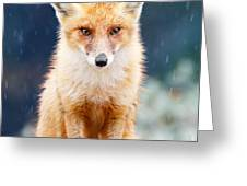 I Can't Stand The Rain  Fox In A Rain Shower Greeting Card by Roeselien Raimond