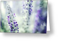 I Dream In Lavender Greeting Card