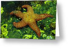 I Found A Starfish Greeting Card