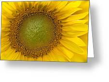 I Got Sunshine Greeting Card