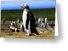 I Have A Dream - Penguin Greeting Card by DerekTXFactor Creative