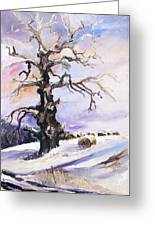 I Have Got Stories To Tell Old Oak Tree In Mecklenburg Germany Greeting Card