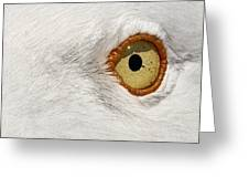 I Have My Eye On You Greeting Card
