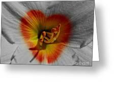 I Heart Flowers Greeting Card