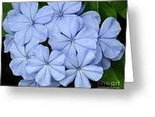 I Love Blue Flowers Greeting Card