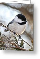 I May Be Tiny But You Should See Me Fly Greeting Card