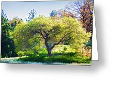 I See Soul And Expression - Julian California Oakscape Greeting Card