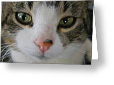 I See You Cat - Square Greeting Card