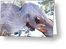 I Spy An Elephant Greeting Card