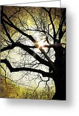I Think I Shall Never See A Poem As Lovely As A Tree... Greeting Card