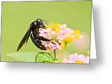 I Want Pollen Greeting Card