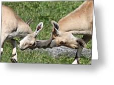 Ibex Doing Battle Greeting Card