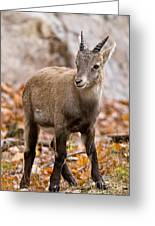 Ibex Pictures 10 Greeting Card