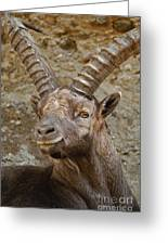 Ibex Pictures 40 Greeting Card