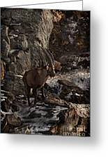 Ibex Pictures 86 Greeting Card