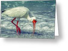 Ibis Feeding Greeting Card
