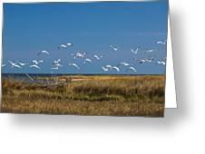 Ibis Flight Greeting Card