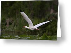 Ibis In Flight Greeting Card