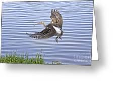Ibis Incoming Greeting Card