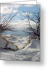 Ice Between The Trees Greeting Card