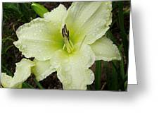 Ice Carnival Daylily Greeting Card