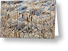 Ice Coated Bullrushes Greeting Card