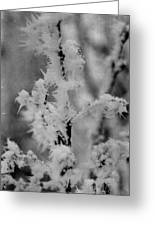 Ice Crystal Greeting Card