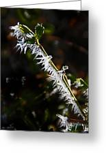 Ice Crystals In Morning Sun Greeting Card