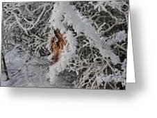 Ice Crystals On A Leaf Greeting Card
